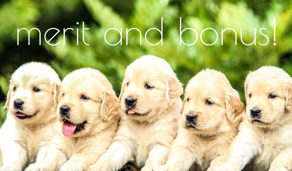 MERIT&BONUS!